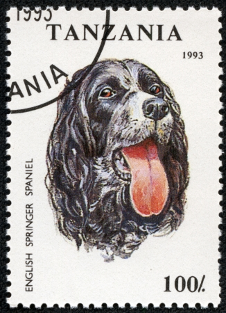 TANZANIA - CIRCA 1993  A stamp printed in Tanzania shows English Springer Spaniel, circa 1993 photo