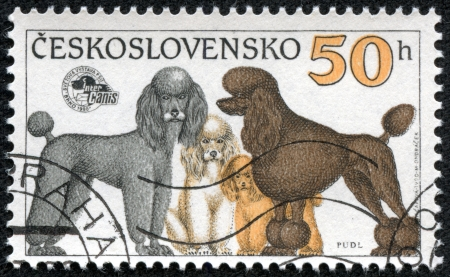 CZECHOSLOVAKIA - CIRCA 1990  A stamp printed in Czechoslovakia shows Poodle Dogs, circa 1990 Stock Photo - 17199168