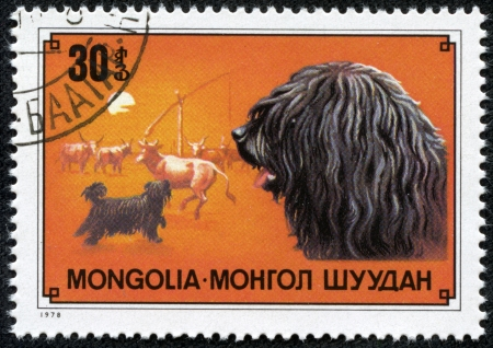 MONGOLIA - CIRCA 1978  a stamp from Mongolia with value of 30 togrog shows image of the puli breed of dog, circa 1978 Stock Photo - 17199365