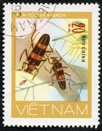 long horn beetle: VIETNAM - CIRCA 1981  A stamp printed in VIETNAM, shows animal insect long horn beetle bug, 20 coins, circa 1981 Stock Photo