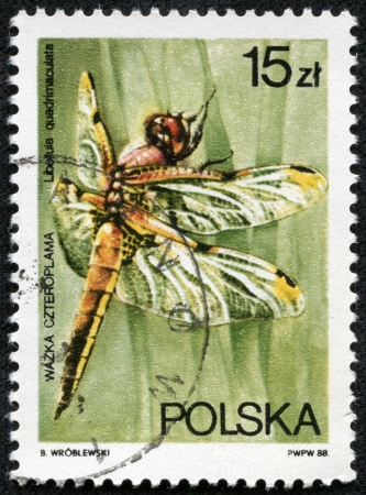 libellula: POLAND - CIRCA 1983  A stamp printed in Poland shows dragonfly Four-spotted Chaser - Libellula quadrimaculata, circa 1983