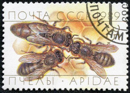 bee queen: URSS-alrededor de 1989 Un sello impreso en la URSS muestra una abeja reina con dos z�nganos en nido de abeja, circa 1989 Foto de archivo