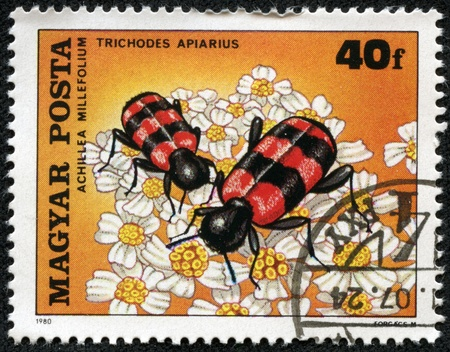 HUNGARY - CIRCA 1980  The postal stamp printed in HUNGARY shows a Beetle, Trichodes apiarius, on Yarrow, Achillea millefolium  Beetle consumes nectar, series, circa 1980 Stock Photo - 17199342