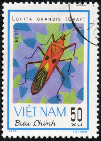 VIETNAM - CIRCA 1982  A stamp printed in Vietnam shows animal insect stink bug, circa 1982 Stock Photo - 17199239