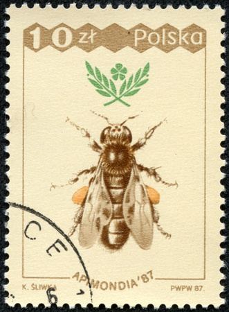 POLAND - CIRCA 1987  A stamp printed in Poland shows bee, circa 1987 Stock Photo