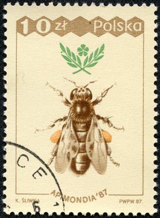 POLAND - CIRCA 1987  A stamp printed in Poland shows bee, circa 1987 Stok Fotoğraf