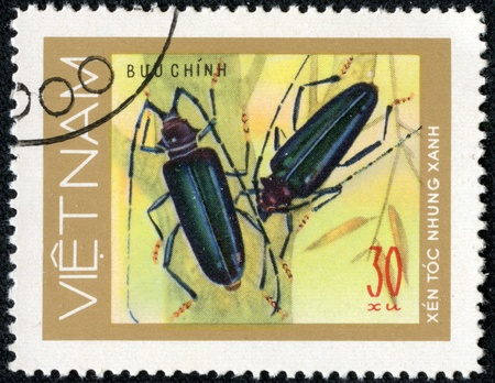 VIETNAM - CIRCA 1981  stamp printed in VIETNAM, shows mottled blue beetles woodcutters, 30 coins, about 1981 Stock Photo - 17199263