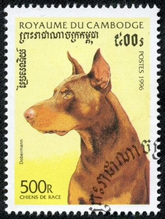 brown dobermann: CAMBODIA - CIRCA 1996  stamp printed by Cambodia, shows a dobermann dog  circa 1996