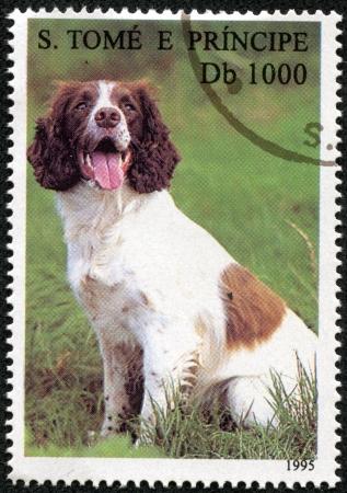 S  TOME E PRINCIPE - CIRCA 1995  A stamp printed in S  Tome e Principe showing dog and cats, circa 1995 Stock Photo - 17261718