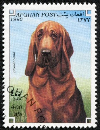 bloodhound: AFGHANISTAN - CIRCA 1998  A stamp printed in AFGHANISTAN shows Dog bloodhound , circa 1998 Editorial