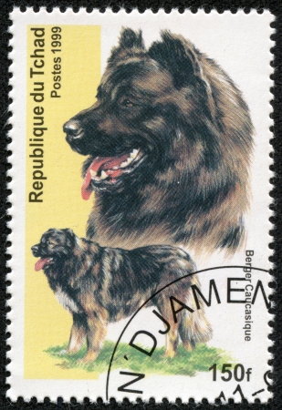 berger: CHAD - CIRCA 1999  A stamp printed in Republic of Chad shows dog berger caucasique , circa 1999