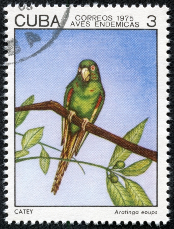 CUBA - CIRCA 1975  A stamp printed in Cuba shows Aratingo eoups, series devoted to the birds, circa 1975