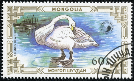 MONGOLIA - CIRCA 1987  stamp printed by Mongolia, shows Swan, circa 1987 photo
