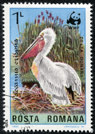 ROMANIA - CIRCA 1984  A stamp printed in the Romania, shows the Dalmatian Pelican  Pelecanus crispus  in the Danube delta, the emblem of WWF, circa 1984 photo
