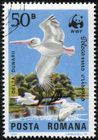 danube delta: ROMANIA - CIRCA 1984  Stamp representing three Pelecamus Crispus in flight over Danube Delta, circa 1984
