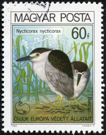 HUNGARY - CIRCA 1980  A stamp printed in Hungary shows Black-crowned night heron, with the inscription  Nycticorax nycticorax , from the series  European Nature Protection Year , circa 1980 Stock Photo - 17308756