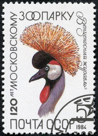 USSR - CIRCA 1984  The postal stamp printed in USSR shows Balearica pavonina, series 120 anniversary of the Moscow Zoo, circa 1984 Stock Photo - 17308796