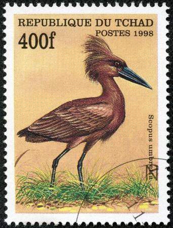 wading: CHAD - CIRCA 1998  A stamp printed in Chad shows scopus umbretta, circa 1998 Stock Photo