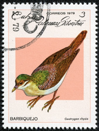 CUBA - CIRCA 1979  A stamp printed in Cuba dedicated to feral pigeons will shows Key West Quail-Dove  Geotrygon chysia , circa 1979 Stock Photo - 17356354
