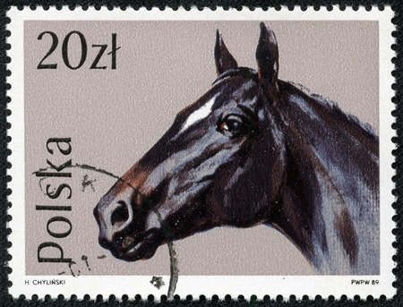 POLAND - CIRCA 1989  A stamp printed in POLAND shows Portrait of a black horse, from series, circa 1989 Stock Photo - 17472129