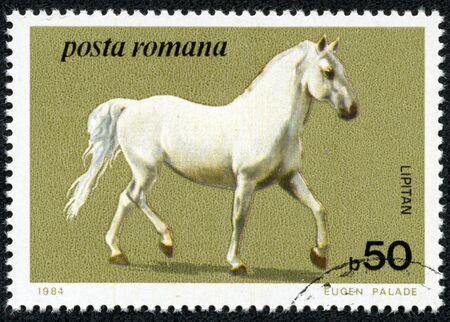 ROMANIA - CIRCA 1984  stamp printed by Romania, show horse, circa 1984  photo