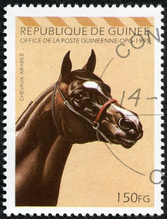 REPUBLIC OF GUINEA - CIRCA 1995  A stamp printed in Republic of Guinea shows Arabian horse, circa 1995 photo