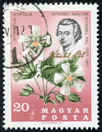 pal: HUNGARY - CIRCA 1967  a stamp printed in the Hungary shows Pal Kitaibel, botanist, chemist, and Kitaibelia Vitifolia, circa 1967 Editorial