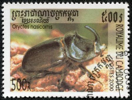 oryctes: CAMBODIA - CIRCA 2000  stamp printed by Cambodia, shows Bug - a beetle  oryctes nasicornis , series beetle,circa 2000  Stock Photo