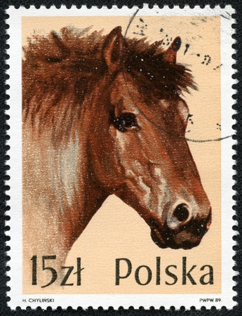 POLAND - CIRCA 1989  A stamp printed in POLAND shows Portrait of a brown heavyweight horse, from series, circa 1989 Stock Photo - 17455643