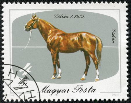 HUNGARY - CIRCA 1985  stamp printed by Hungary, shows dog, horse circa 1985 Stock Photo - 17455634