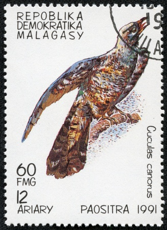 MALAGASY - CIRCA 1991  A stamp printed by Malagasy, shows Bird, Cuckoo, circa 1991 Stock Photo - 17455576