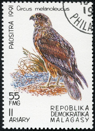 MALAGASY - CIRCA 1991  A stamp printed by Malagasy, shows Bird, Pied Harrier, circa 1991 photo