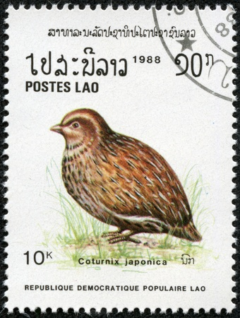 japanese quail: LAOS - CIRCA 1988  A stamp printed in Laos shows Coturnix japonica or Japanese Quail, series, circa 1988 Stock Photo