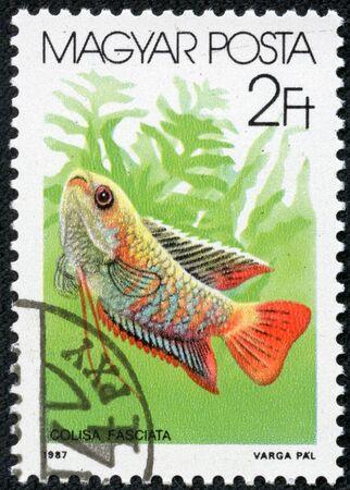 fish toy: UNGHERIA - CIRCA 1987 Un timbro stampato da Ungheria, mostra acquario, subacqueo, pesce giocattolo, circa 1987