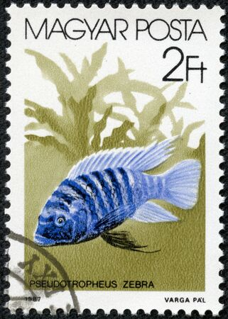 exotica: HUNGARY - CIRCA 1987  stamp printed by Hungary, shows aquarium, underwater, toy fish circa 1987