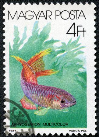 fish toy: UNGHERIA - CIRCA 1987 timbro stampato da Ungheria, mostra acquario, subacqueo, pesce giocattolo circa 1987