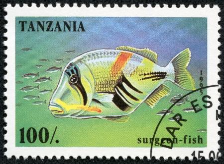 surgeon fish: TANZANIA - CIRCA 1995 Un sello impreso en Tanzania muestra Surgeon-fish, circa 1995 Foto de archivo