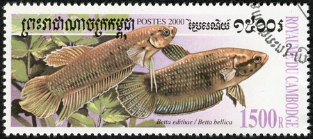 CAMBODIA - CIRCA 2000  A stamp printed in CAMBODIA shows fish, circa 2000 Stock Photo - 17913853