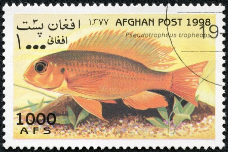 AFGHANISTAN - CIRCA 1998  A stamp printed in Afghanistan showing Tropheops Red Cheek, circa 1998 Stock Photo - 17920417