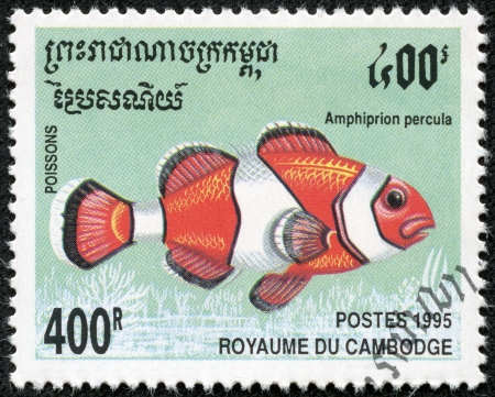CAMBODIA - CIRCA 1995  A stamp printed Cambodia shows Amphiprion percula, circa 1995 Stock Photo - 18139932