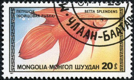 betta: MONGOLIA - CIRCA 1987  A stamp printed in Mongolia showing fish circa 1987