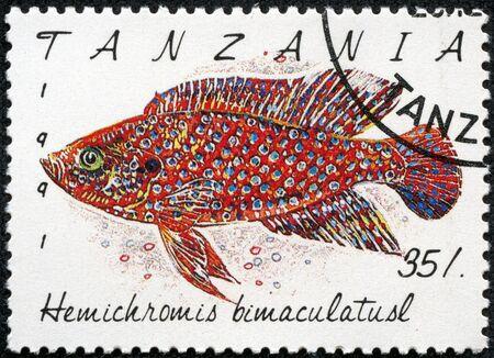 TANZANIA - CIRCA 1991  A stamp printed in Tanzania shows Hemichromis bimaculatusl, circa 1991 Stock Photo - 18139906