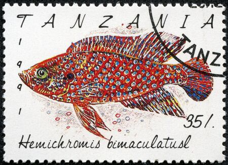 TANZANIA - CIRCA 1991  A stamp printed in Tanzania shows Hemichromis bimaculatusl, circa 1991 Stock Photo - 18139906