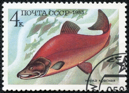 USSR - CIRCA 1983  A stamp printed in USSR shows image of a Oncorhynchus Nerka, from the series  Food Fish , circa 1983 Stok Fotoğraf