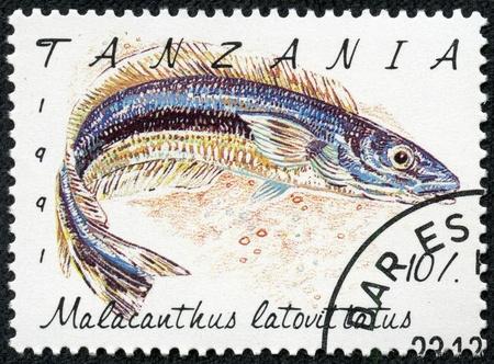 TANZANIA - CIRCA 1991  A stamp printed in Tanzania shows Malacanthus latovittatus, circa 1991 Stock Photo - 18368314
