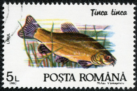 tinca tinca: ROMANIA - CIRCA 1992  A stamp printed in Romania shows Tinca tinca, with the same inscription, from the series  Fishes , circa 1992