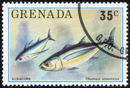 thunnus: GRENADA - CIRCA 1976  A stamp printed in Grenada shows Albacore - Thunnus atlanticus, circa 1976 Editorial