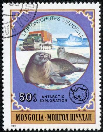 polar station: MONGOLIA - CIRCA 1980  stamp printed by Mongolia, shows Weddel Seals, circa 1980
