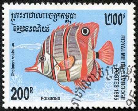 chelmon: CAMBODIA - CIRCA 1995  A stamp printed Cambodia shows Chelmon rostratus, circa 1995