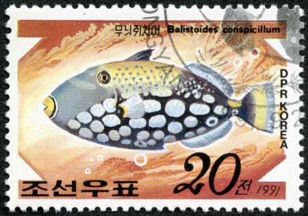 balistoides: DPR KOREA - CIRCA 1991  A stamp printed by DPR KOREA  North Korea  shows a fish  Balistoides conspicillum , stamp is from the series  Tropical fishes  circa 1991  Editorial